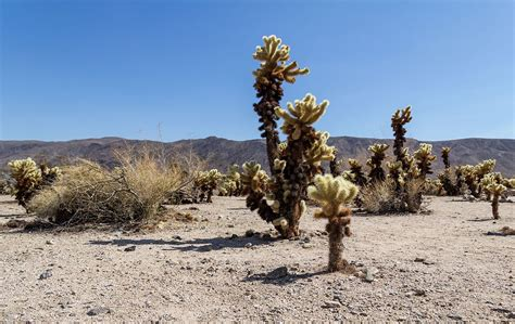 Filejoshua Tree National Park California Usa 2012