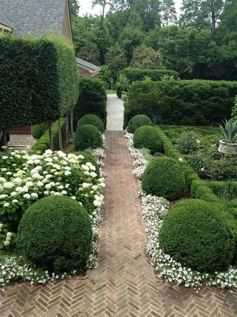 hedge gardens boxwood and white flower hedges garden design pinterest