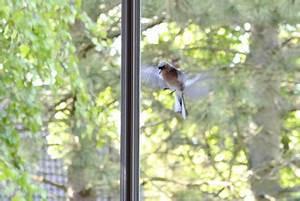 Viele Fliegen Am Fenster : vogel gegen scheibe geflogen was tun tipps und vorbeugung ~ Orissabook.com Haus und Dekorationen