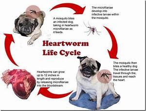 63a heartwormspart1