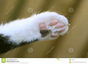 cats paw cats paw stock photos image 1392013