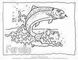 Trout Coloring Rainbow Fish Drawing Pages Outline Printable Jumping Animal Forelle Realistic Adult Water Ausmalbilder Template Malvorlagen Malvorlage Detailed Fishing sketch template