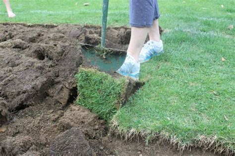 Super Easy Sod Removal