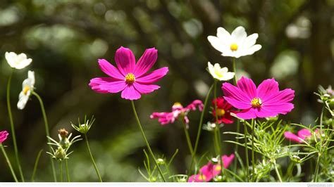 Awesome Spring Wallpapers With Flowers