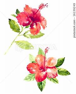 Collection of watercolor hibiscus flowers - Stock ...