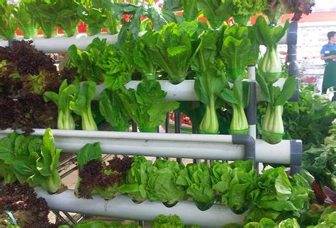 Make A Vertical Garden by How To Make A Simple Minimalist Vertical Garden