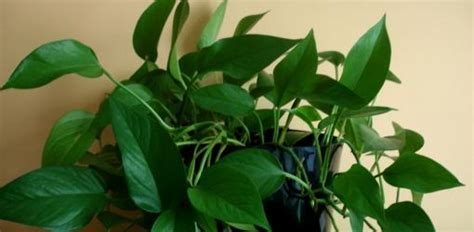 How to Grow Houseplants in Low Light Conditions   Today's