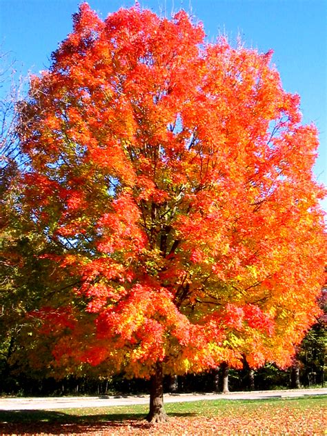 a tree in the fall seasons on salt creek