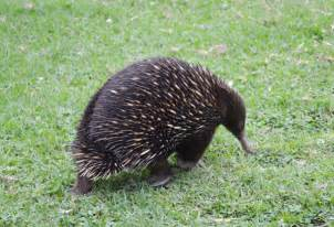 Australia Wildlife Animals