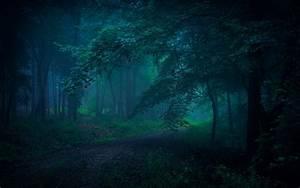 4556964, Leaves, Landscape, Mist, Shrubs, Dirt, Road, Trees, Nature, Path, Sunlight