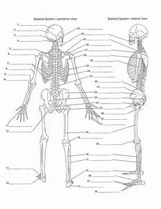 Axial Skeleton Labeling Quiz Skeletaldiagrampg9 Page0001