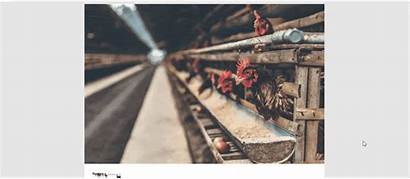 Poultry Farming Project Pdf Report Proposal Step