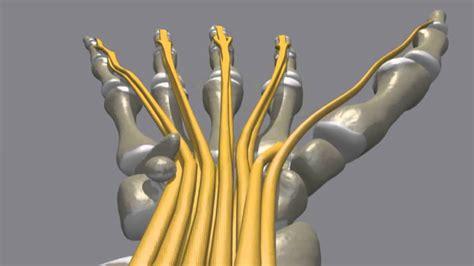 Neiroloģija - nervu sistēmas bojājumi 14. novembris - YouTube