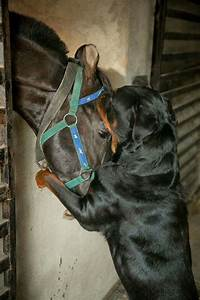 *Face hugs | Dogs | Pinterest | For always, The horse and ...