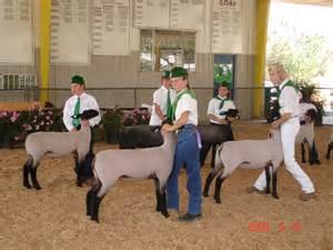 4-H Livestock Club Activities