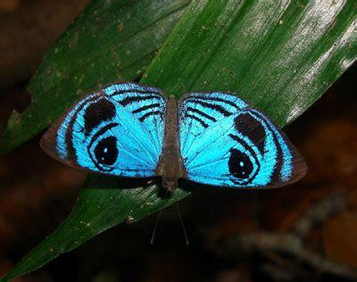 lost   blue eyes   croesus eyemark