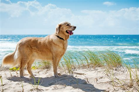 Urlaub Mit Hund » Hundefreundliche Hotels Tuiat