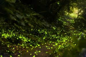 5 Bedroom Cabins In Gatlinburg Tn by Dates For The Synchronous Fireflies Light Show Revealed