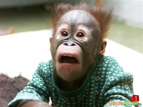 Surprised Meme Face - surprised monkey blank template imgflip