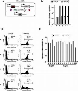 Reporter Gene Induction By Two Plasmids Tet