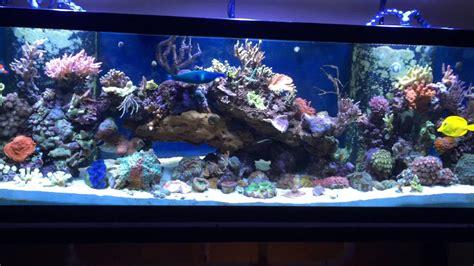150 liters to gallons 150 liter aquarium oi35 hitoiro
