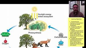 Metabolism  Photosynthesis  And Cellular Respiration