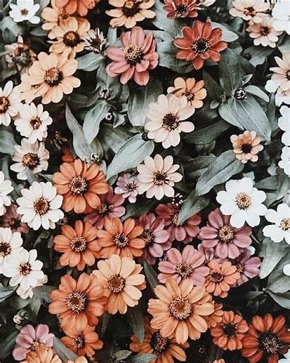 Aesthetic Flower Floral Wallpapers Flowers Desktop Background