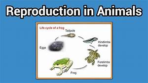 Reproduction In Animals  Animal That Lay Eggs Class