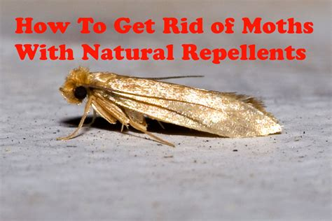 how to get rid of moths with repellents corner