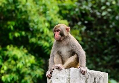 Monkey Monkeys Scientist Noise Hear Facts Dream