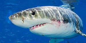 Your Ultimate  Weekly Guide To Discovery Channel U0026 39 S Shark Week