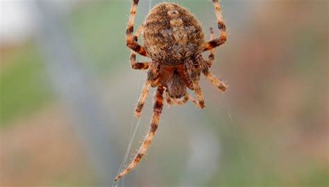 arachnid lifestyles life   finger lakes