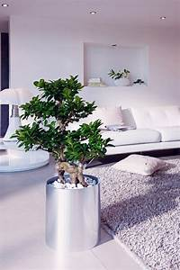 Feng Shui Wohnzimmer Pflanzen : feng shui plants for harmony and positive energy in the living room interior design ideas ~ Bigdaddyawards.com Haus und Dekorationen