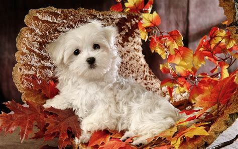 Fall Backgrounds Dogs by Archive For July 2013