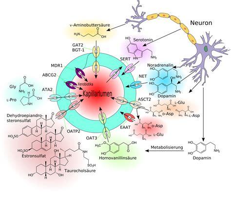 Per Raumluftanalyse Schadstoffe Identifizieren by Blut Gehirn Schranke