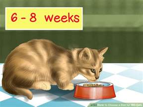 ibd in cats how to choose a diet for ibd cats 11 steps with pictures