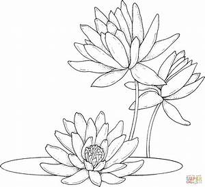 Water lilies coloring page | Free Printable Coloring Pages