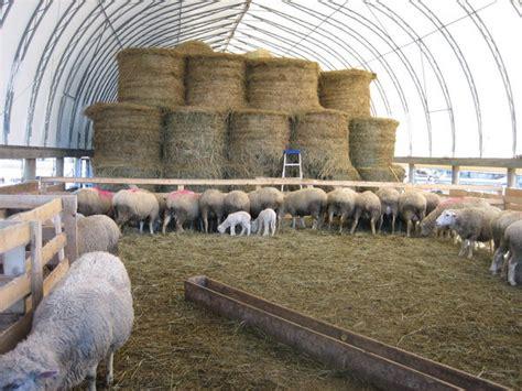 sheep   barn photo
