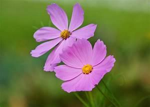 Light Purple Flowers by Edward Myers