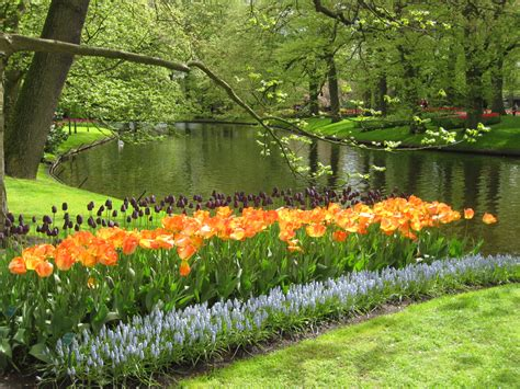 pictures of flowers and trees beautiful trees with flowers www imgkid com the image kid has it