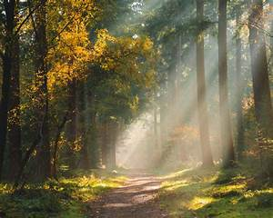 Download, Wallpaper, 1280x1024, Forest, Path, Sunlight, Trees, Standard, 5, 4, Hd, Background