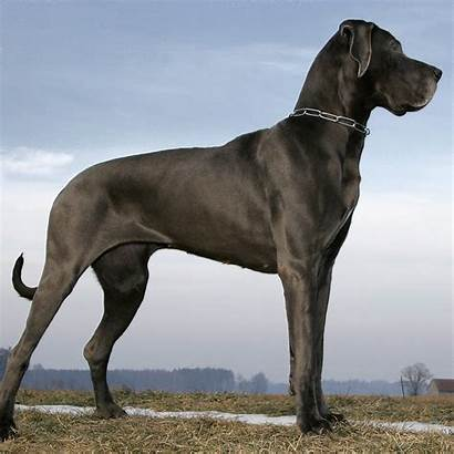 Dog Breeds Giant Popular Wall St