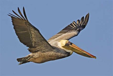 the most endangered species in belize belize animals