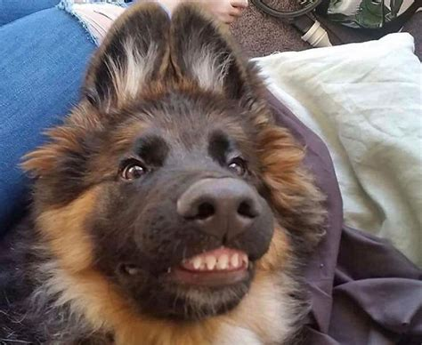 This Online Community Shares The Silliest Dog Photos Where Their Teeth Are Visible In A Funny