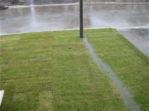 grading backyard drainage landscaping ideas and swale in backyard pdf