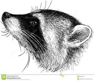 Raccoon Head Drawing