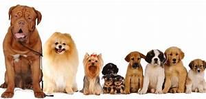 Cani, gatti e altre persone interessanti: animali e personalità dott Carlo Boracchi a