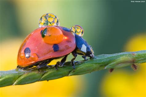 spectacular examples  insect photography