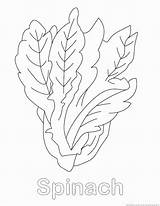 Spinach Coloring Vegetable Drawings Pages Print Designlooter 123coloringpages 930px 18kb sketch template