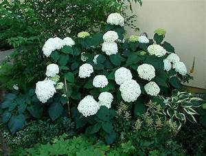 Hortensien Kombinieren Mit Anderen Pflanzen : dreieck vor haus gestalten mein sch ner garten forum ~ Eleganceandgraceweddings.com Haus und Dekorationen